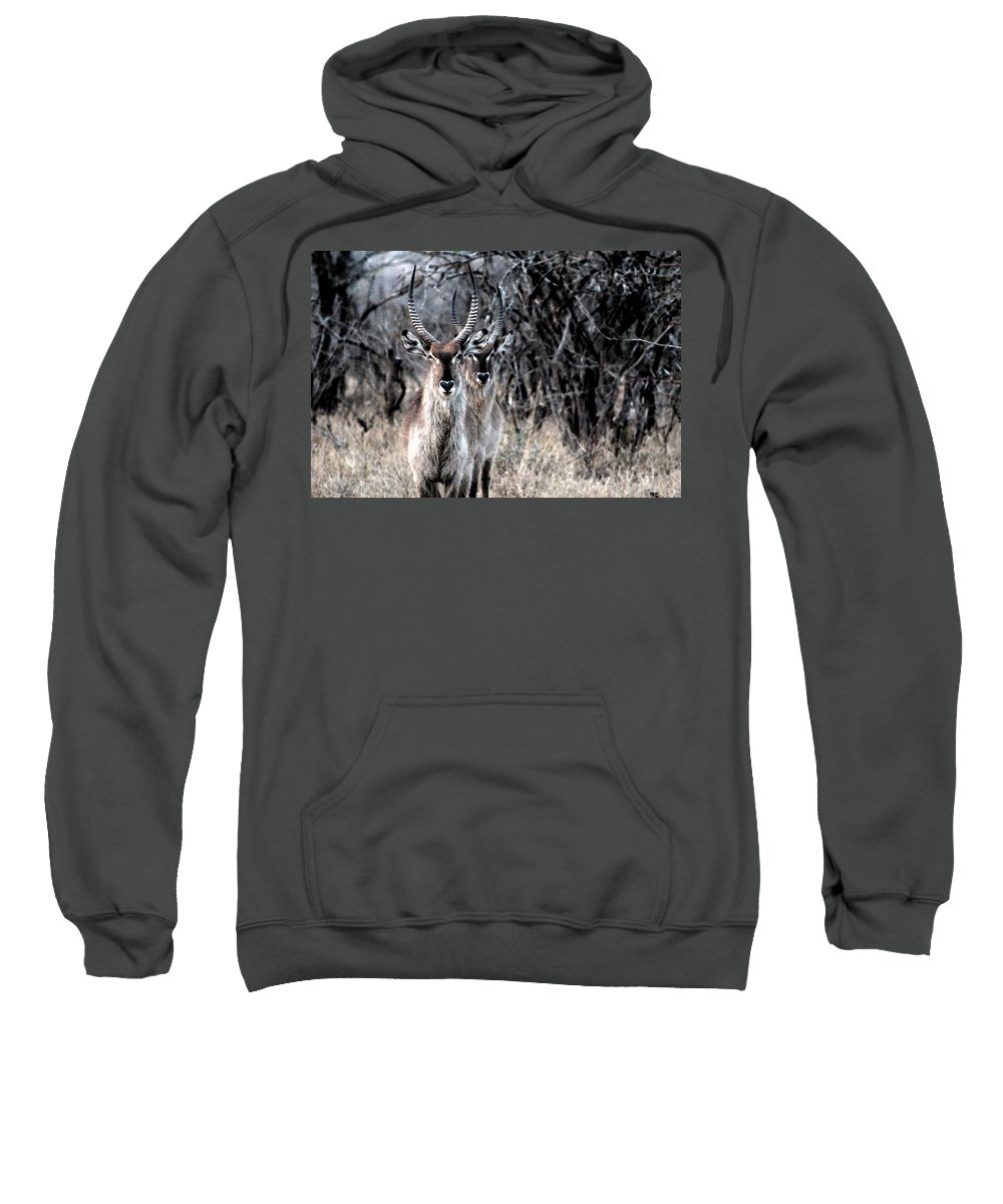 Adult Sweatshirt featuring the photograph Brothers by Paul Fell