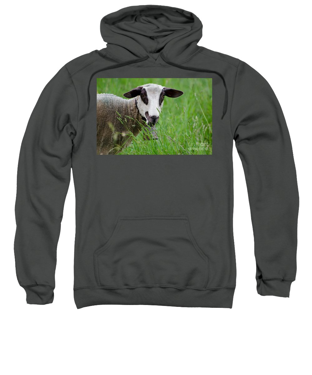 Sheep Sweatshirt featuring the photograph Brown And White Sheep by Mats Silvan