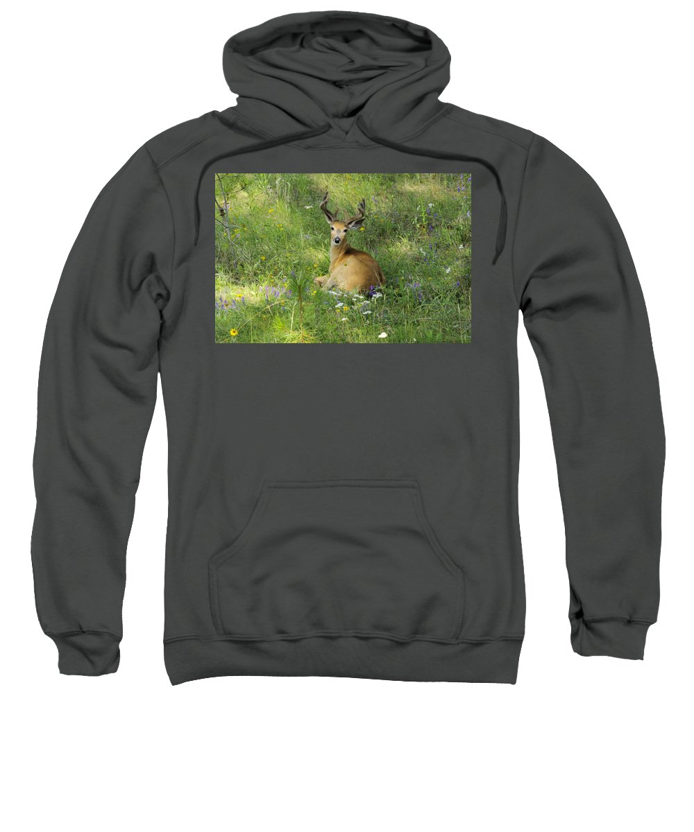 Deer Sweatshirt featuring the photograph Buck What Are You Looking At by John Greaves