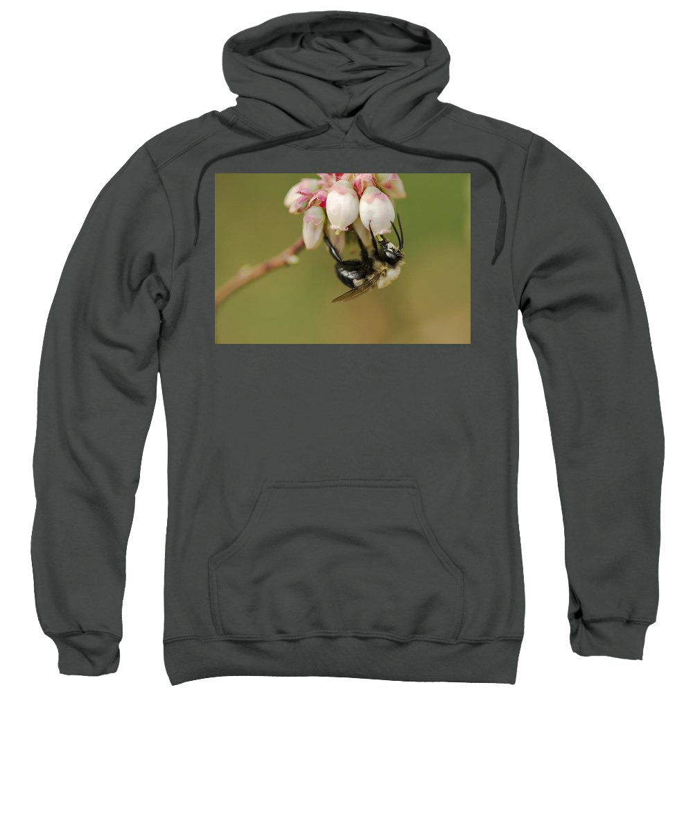 Bumblebee Sweatshirt featuring the photograph Bumble Bee And Blueberry Blossoms by Kathy Clark