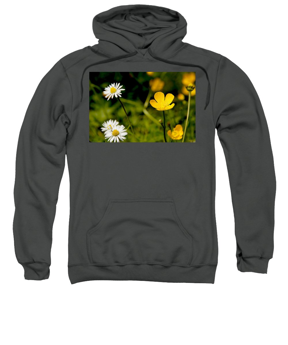 Flower Sweatshirt featuring the photograph Buttercup In Riverside Park by Mick Anderson