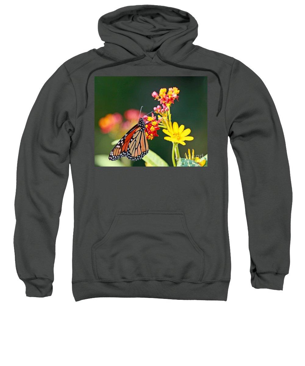 Butterfly Sweatshirt featuring the photograph Butterfly Monarch On Lantana Flower by Luana K Perez