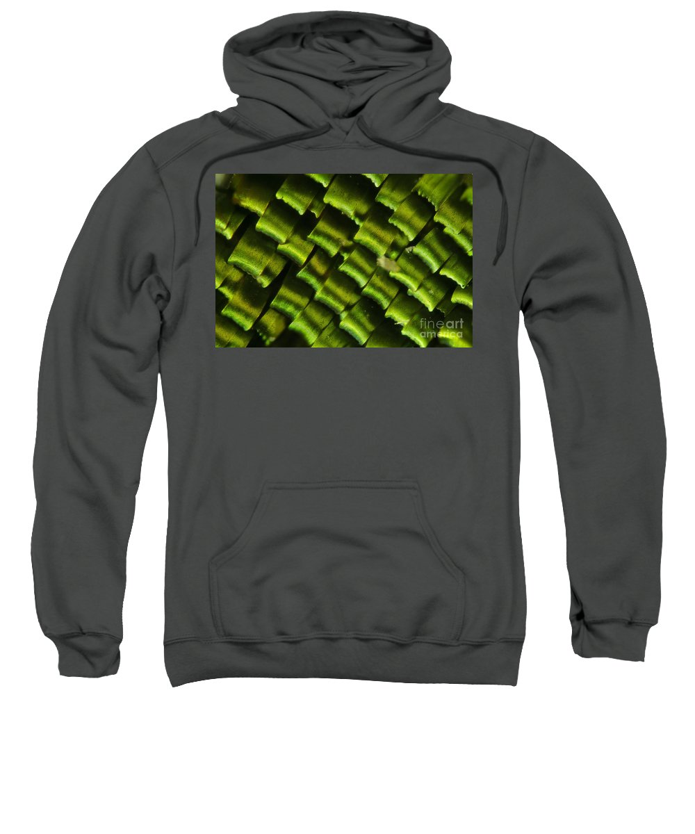 Fauna Sweatshirt featuring the photograph Butterfly Wing Scales by Raul Gonzalez Perez