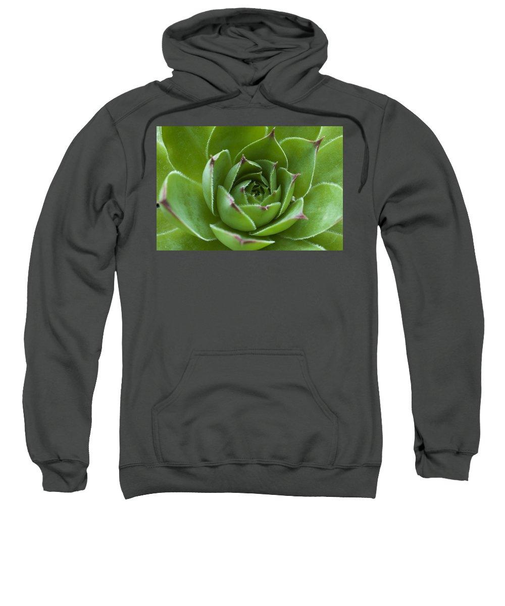 Cacti Sweatshirt featuring the photograph Cactus by David Chapman