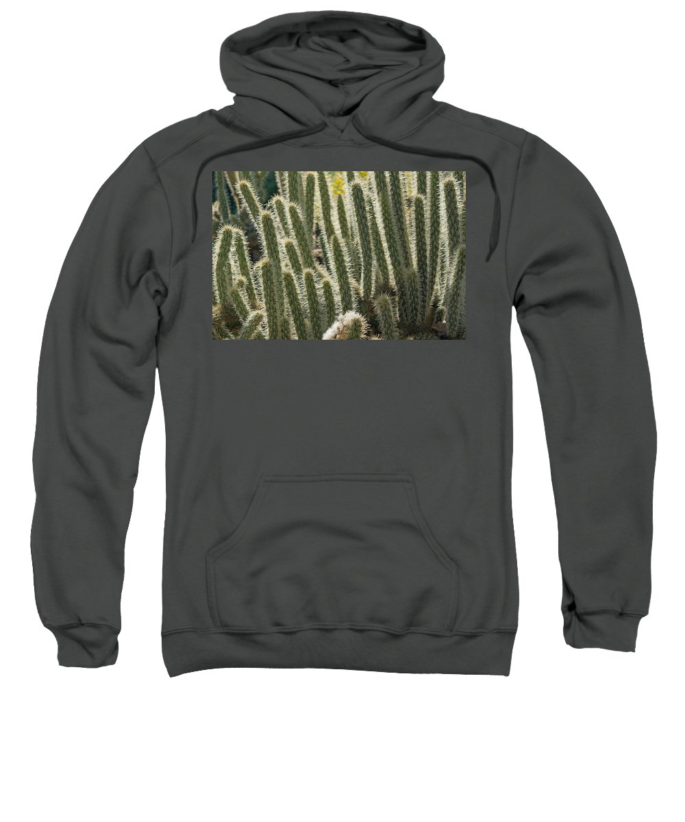 Cactus Sweatshirt featuring the photograph Cactus With Halos by Sumi Martin