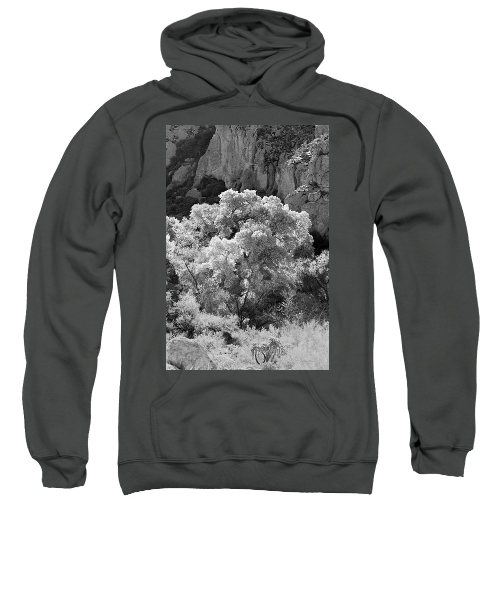 Landscape Sweatshirt featuring the photograph Canyon Treasure by Phyllis Denton