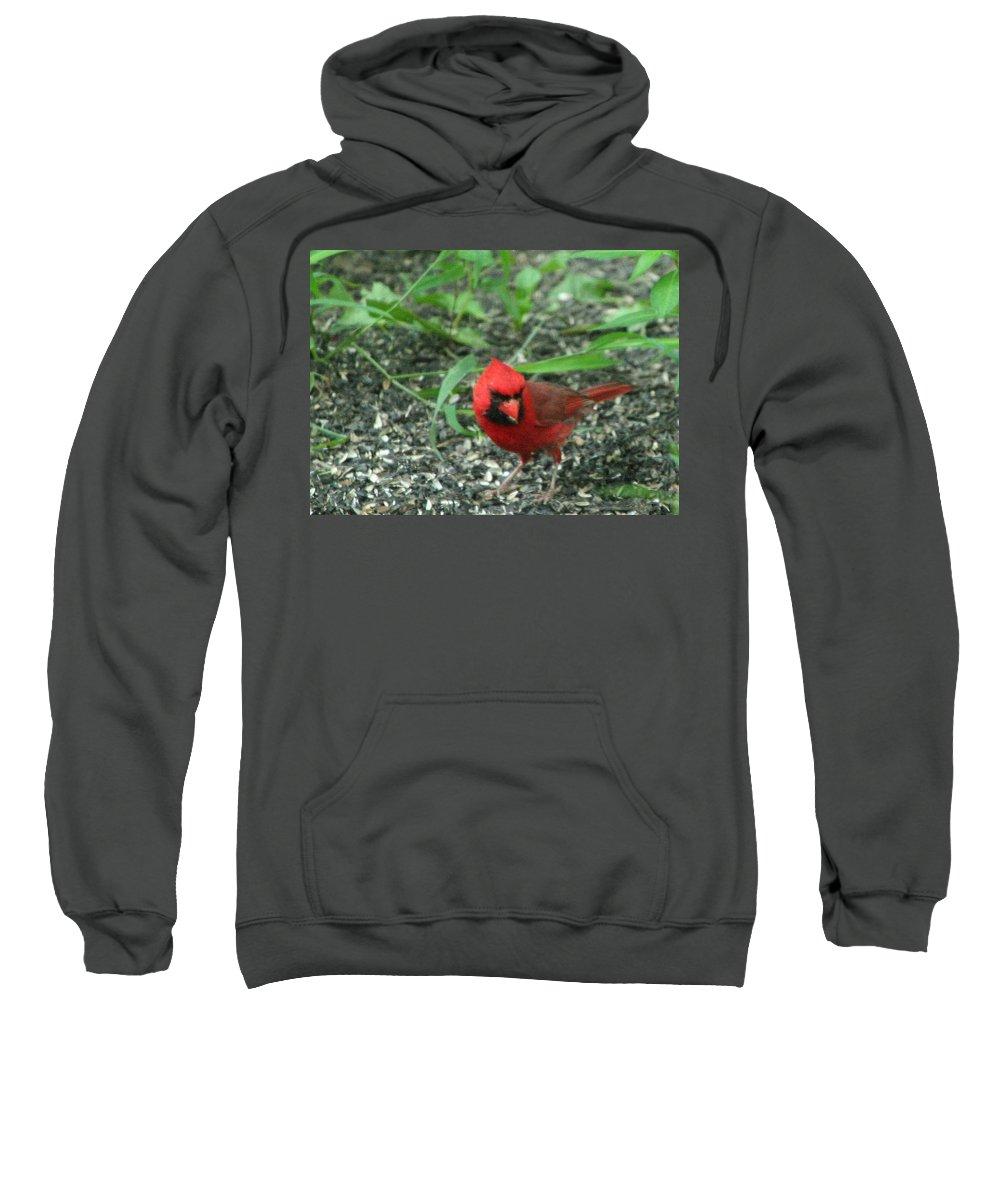 Cardinalis Cardinalis Sweatshirt featuring the photograph Cardinal In Springtime by Laurel Talabere