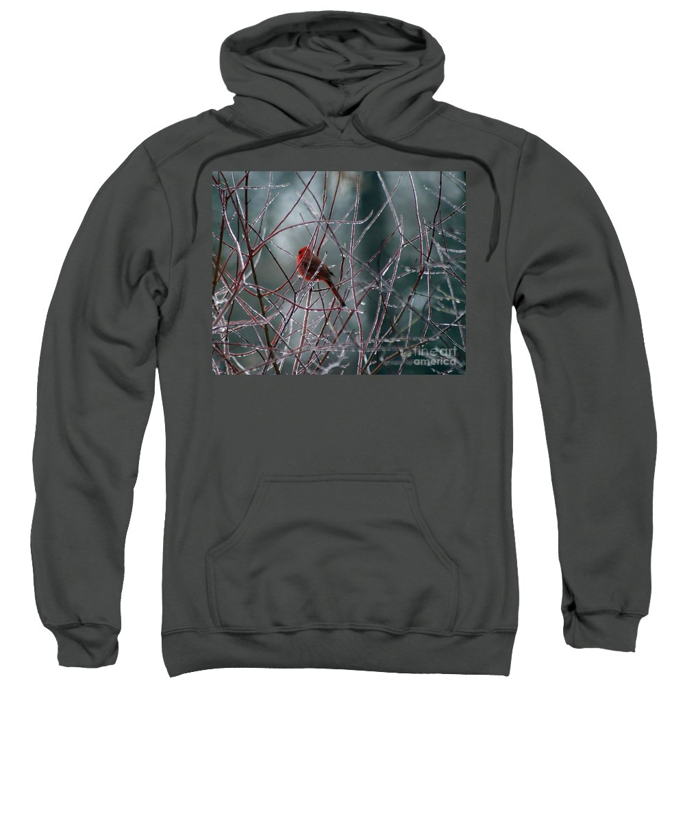 Bird Sweatshirt featuring the photograph Cardinal On Ice by Living Color Photography Lorraine Lynch