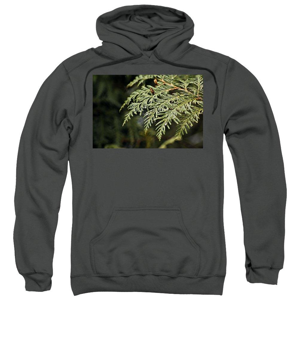 North America Sweatshirt featuring the photograph Cedar Due Droplets by LeeAnn McLaneGoetz McLaneGoetzStudioLLCcom