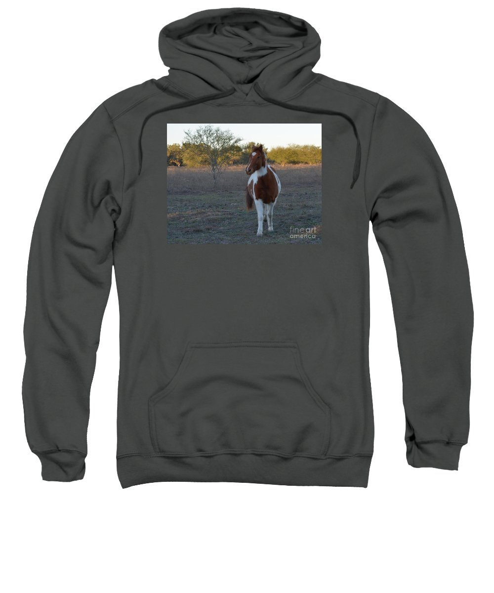 Animal Sweatshirt featuring the photograph Charley by Donna Brown