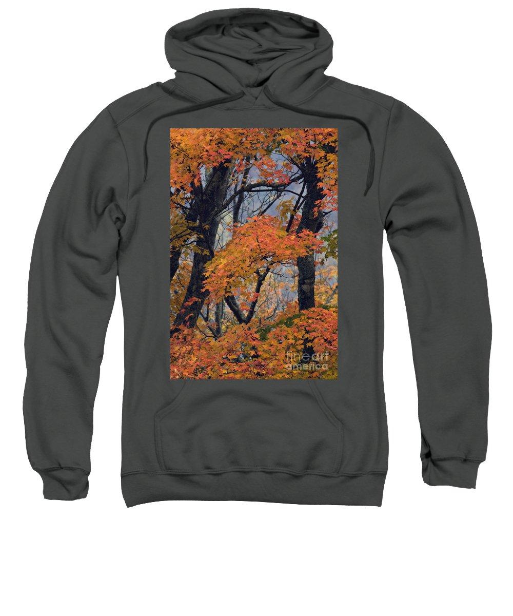 Autumn Sweatshirt featuring the photograph Cherohala Maple - D007676 by Daniel Dempster