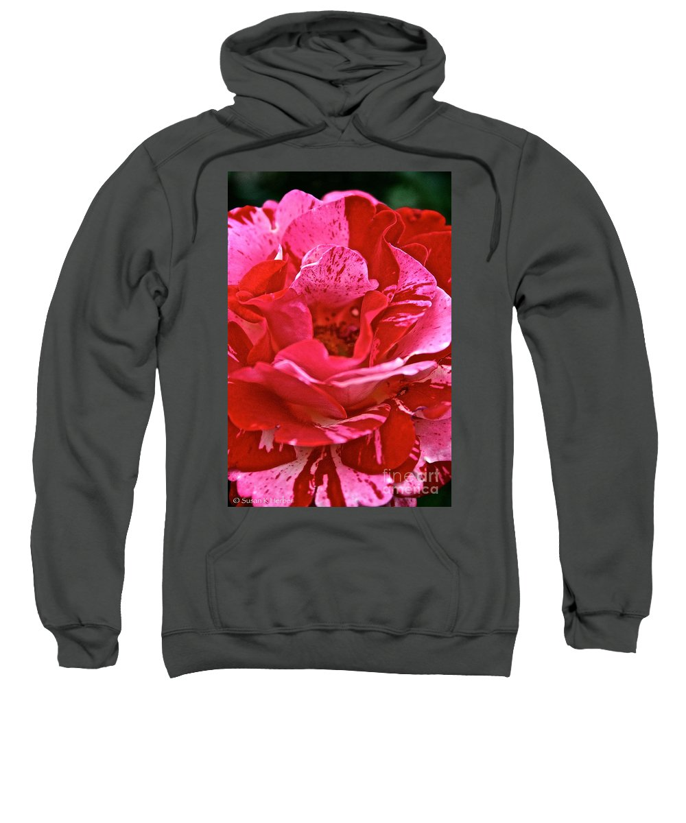 Floral Sweatshirt featuring the photograph Cherry Chip Rose Petals by Susan Herber