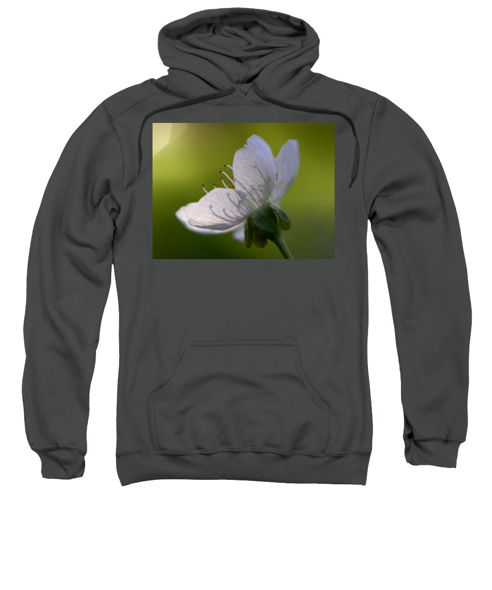 Jouko Lehto Sweatshirt featuring the photograph Cherry Flower by Jouko Lehto