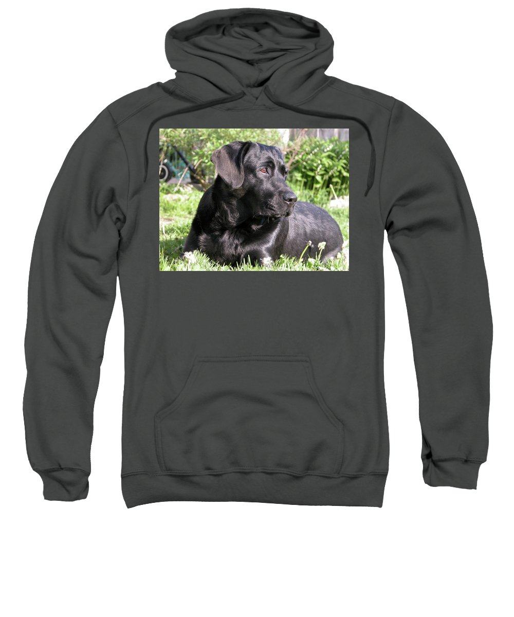Dog Sweatshirt featuring the photograph Chicago 0085 by Guy Whiteley