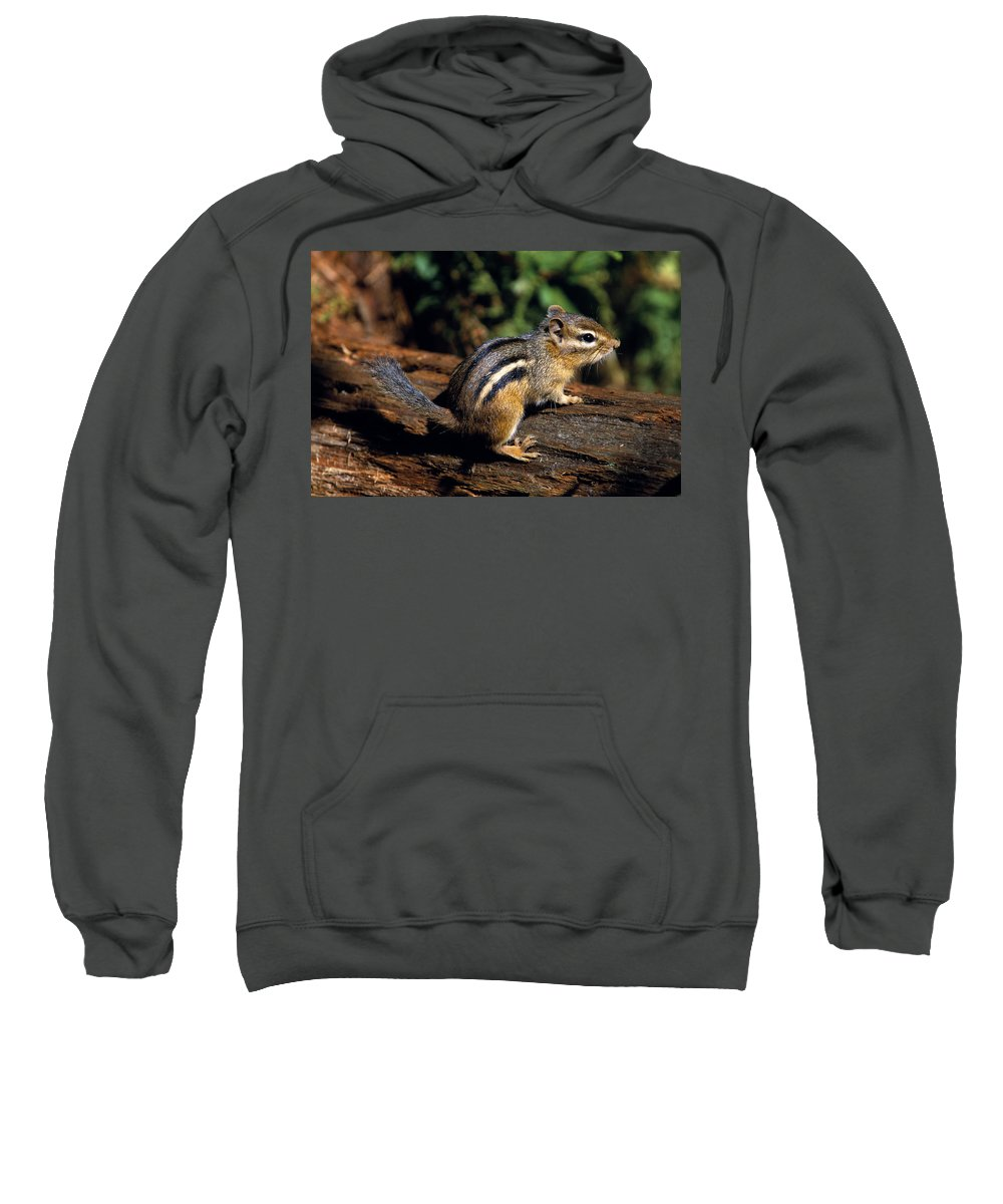 Outdoors Sweatshirt featuring the photograph Chipmunk On A Log by Natural Selection Bill Byrne