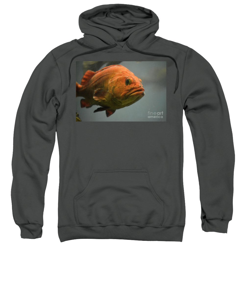 Undersea Gardens Sweatshirt featuring the photograph Close And Fishy by Traci Cottingham