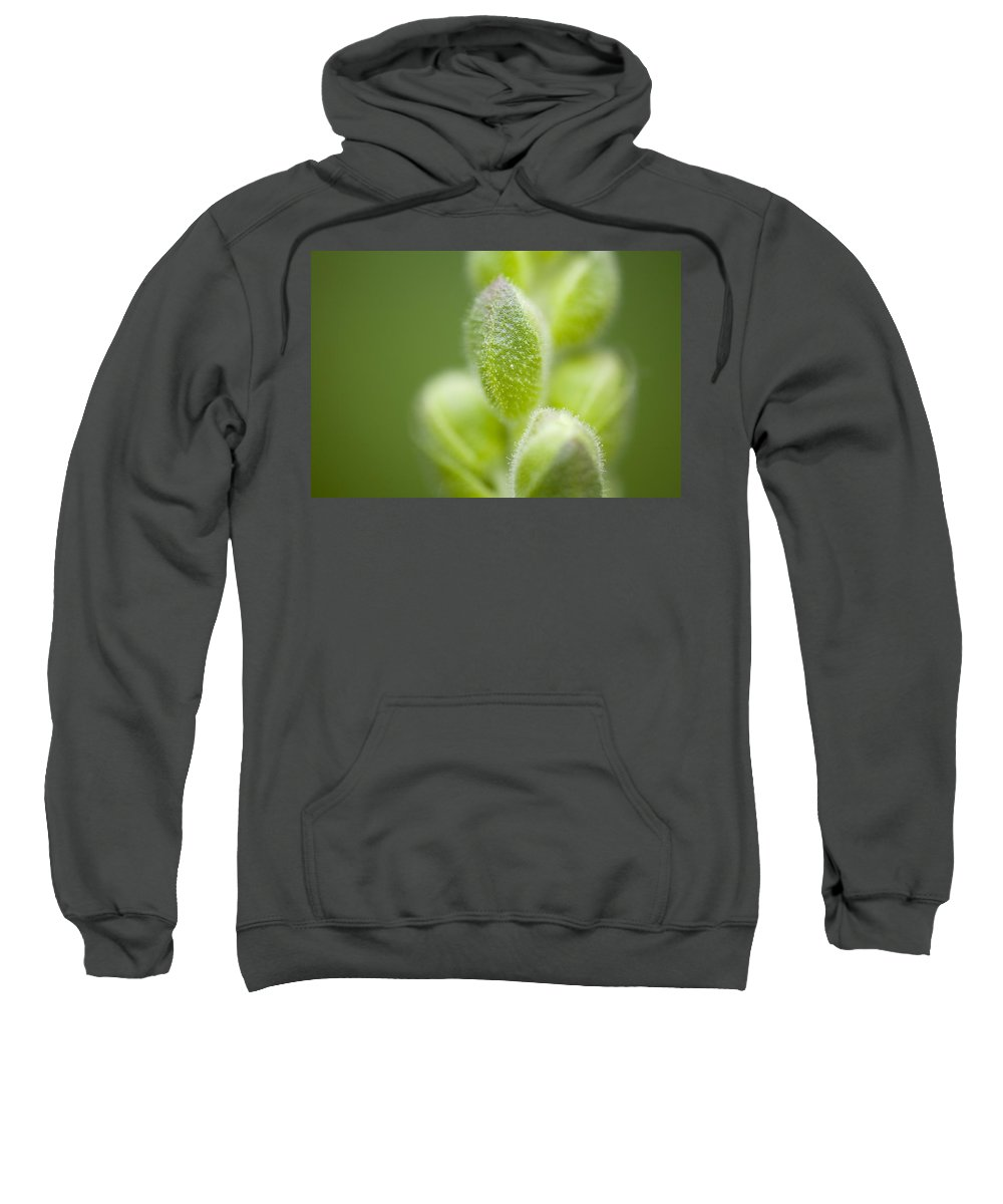 Beauty In Nature Sweatshirt featuring the photograph Close-up Of Flower Buds by Craig Tuttle