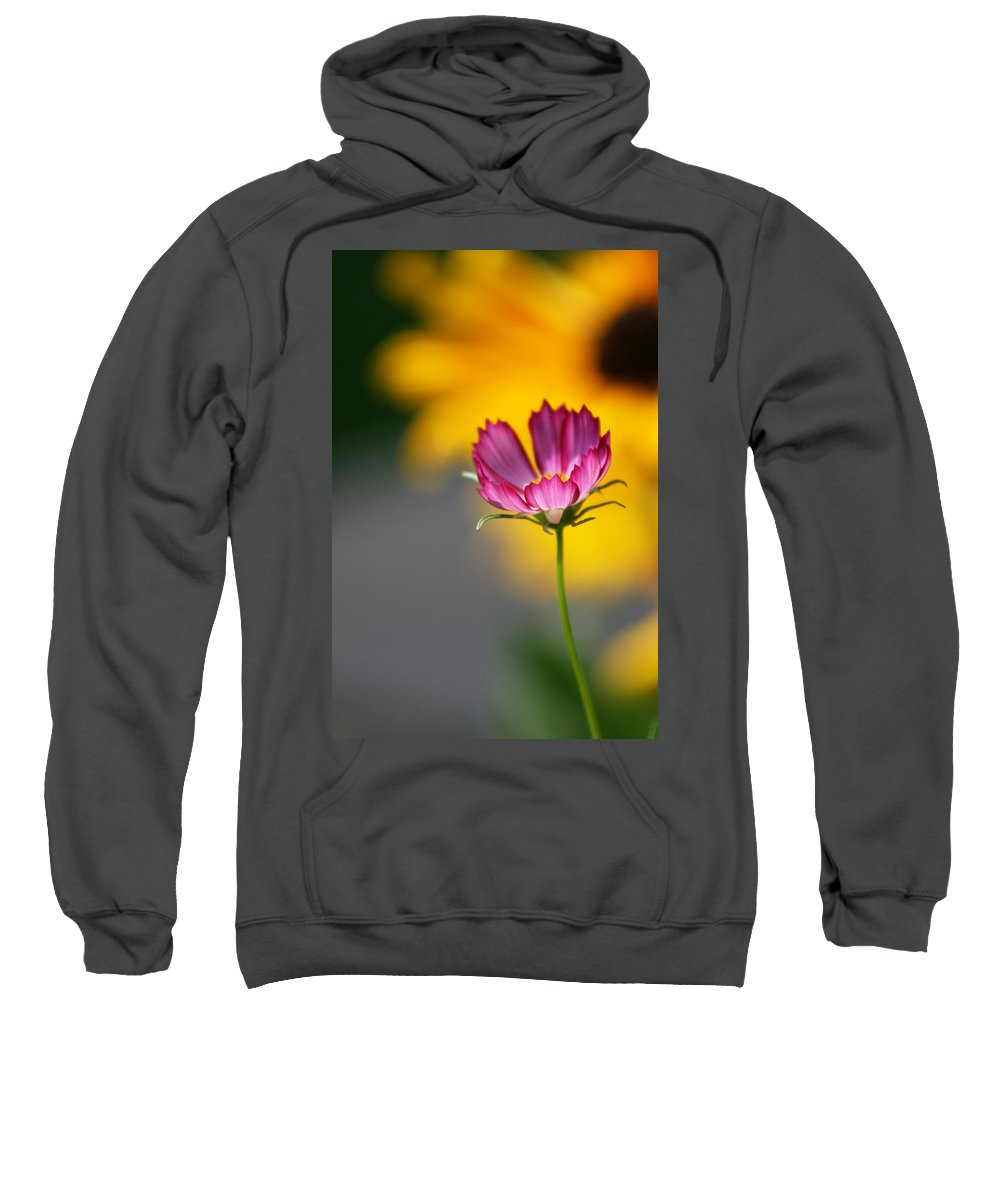 Cosmos Sweatshirt featuring the photograph Colorful Cosmos And Black Eyed Susan Background by Kathy Clark