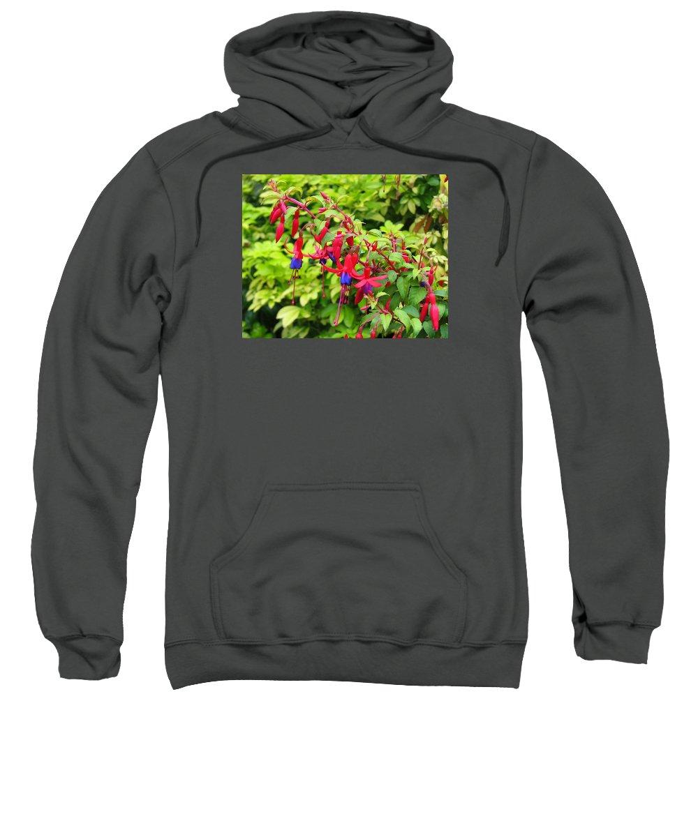 Fuchsia Sweatshirt featuring the photograph Colorful Fuchsia by Carla Parris