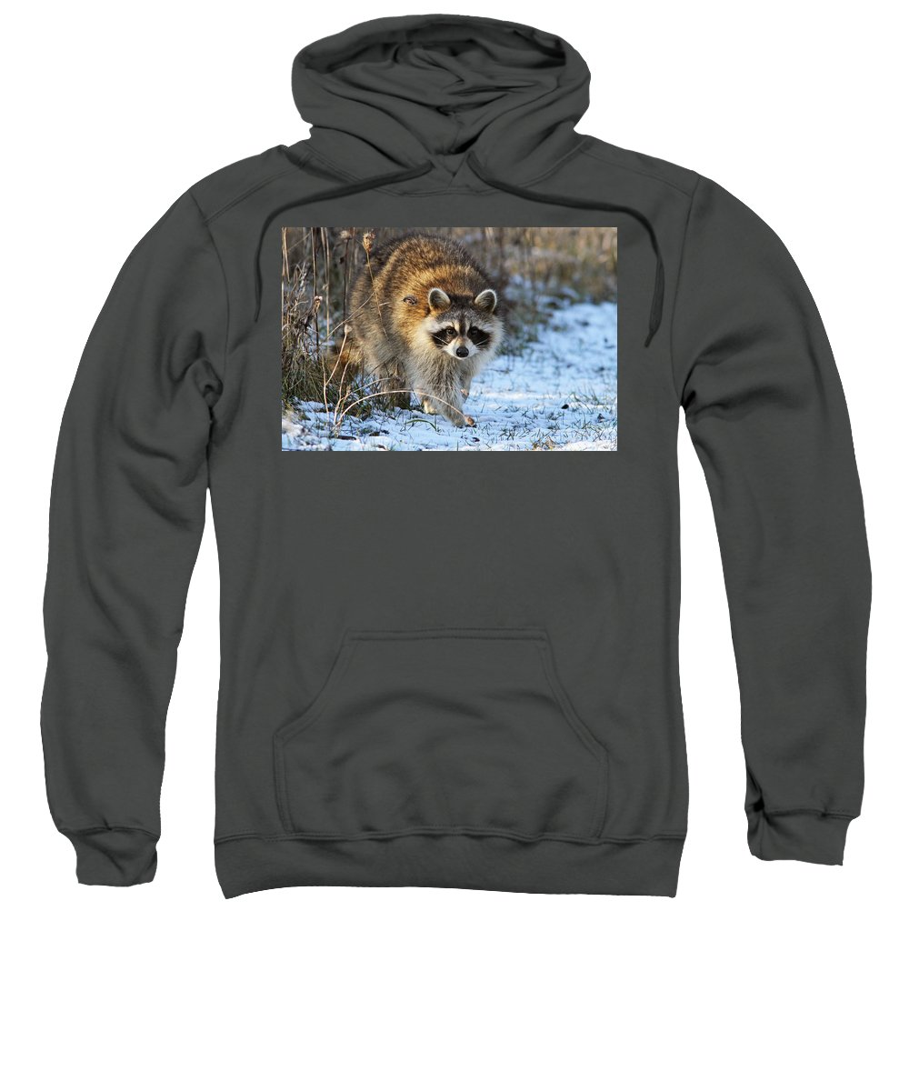 Banditos Sweatshirt featuring the photograph Common Raccoon by Mircea Costina Photography