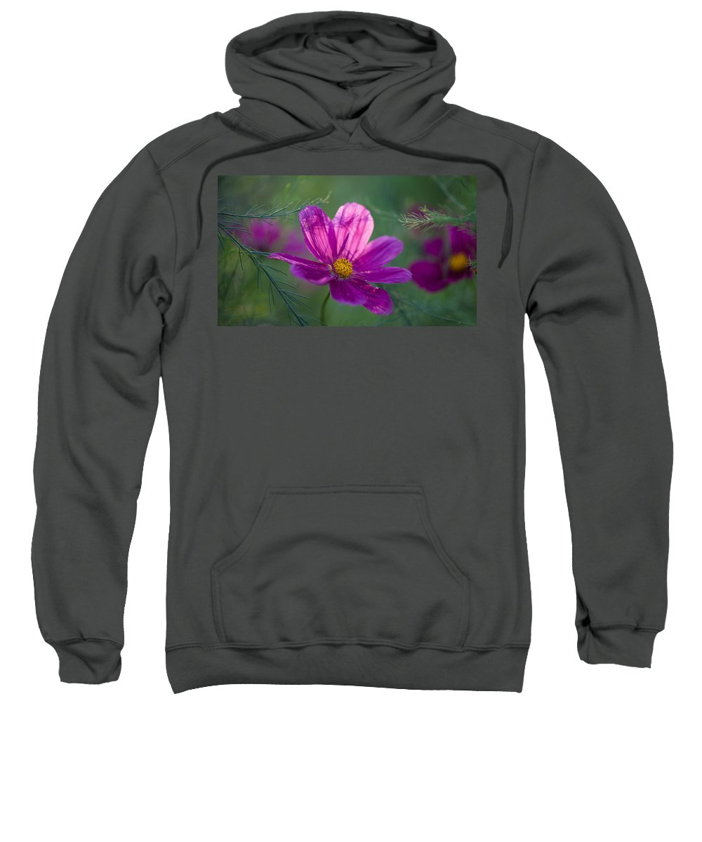 Flower Sweatshirt featuring the photograph Cosmos Dreamland by Mike Reid