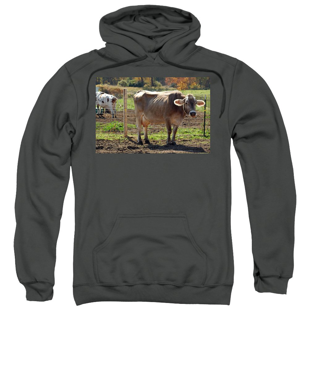 United_states Sweatshirt featuring the photograph Cow Shadows by LeeAnn McLaneGoetz McLaneGoetzStudioLLCcom
