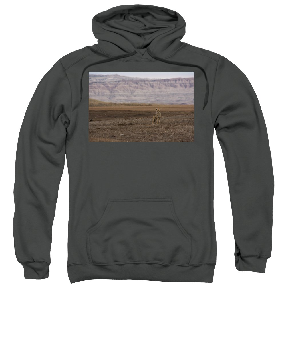 Coyote Sweatshirt featuring the photograph Coyote Badlands National Park by Benjamin Dahl