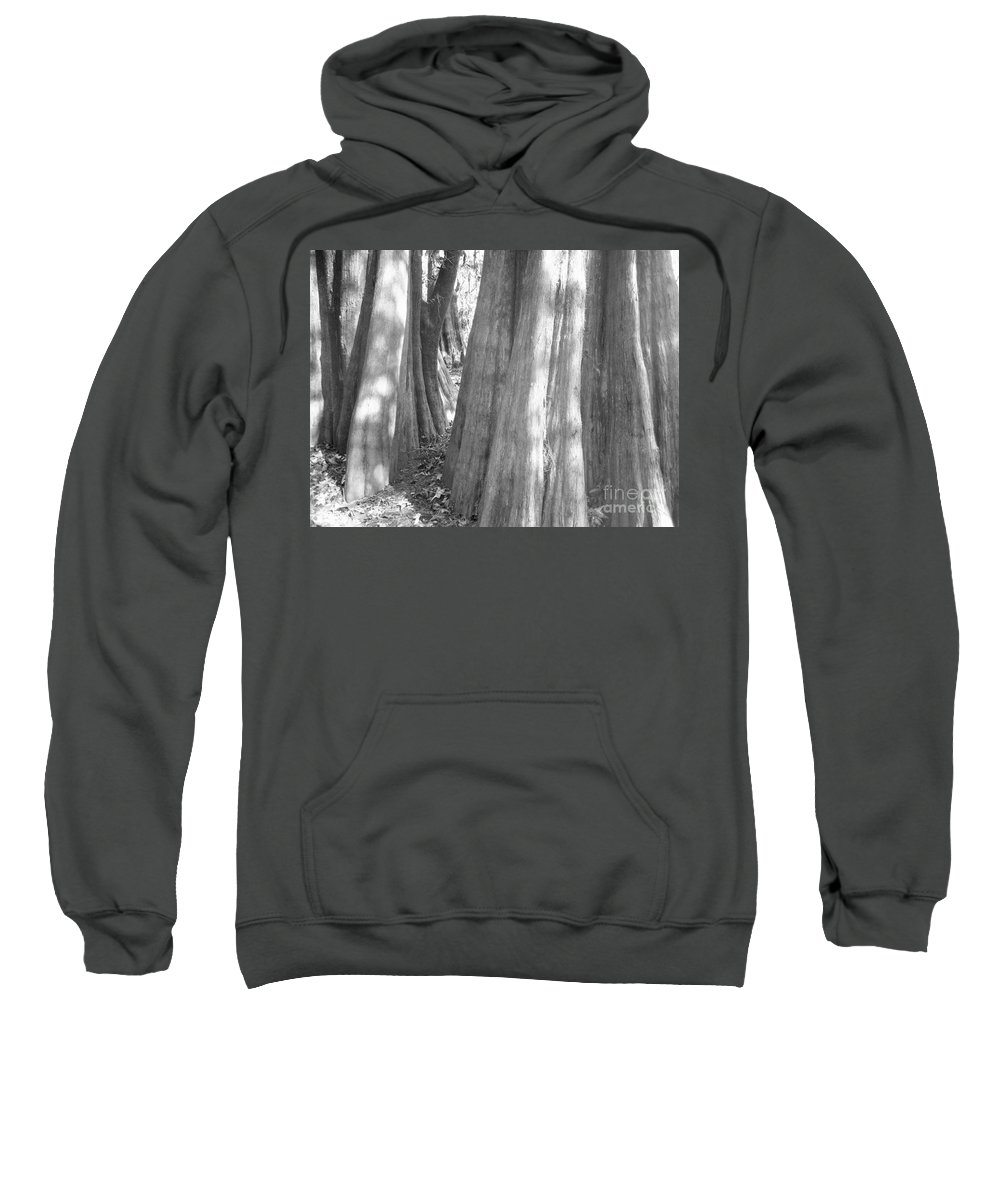 Cypress Path Sweatshirt featuring the photograph Cypress Path by Melody Jones