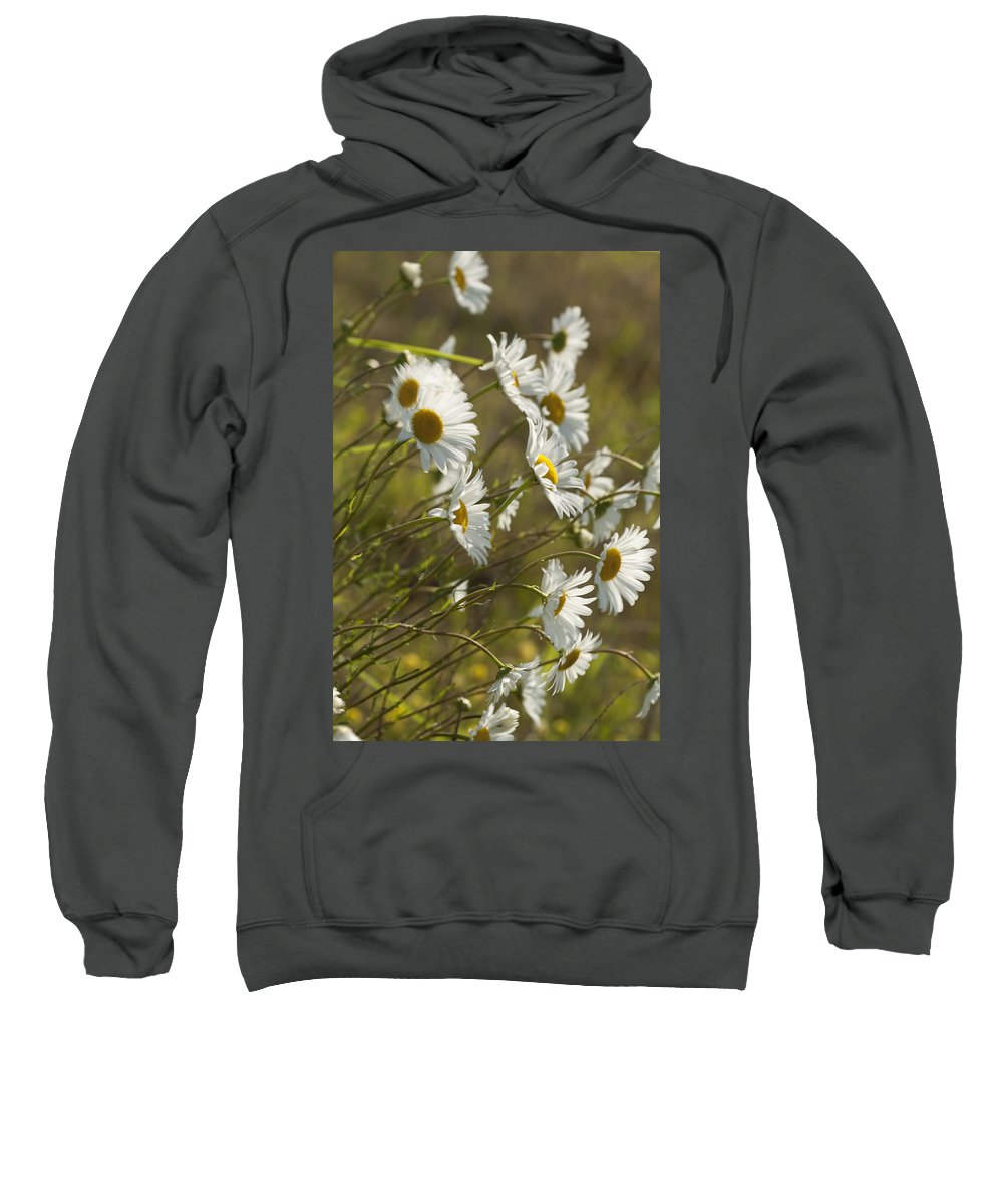 Daisy Sweatshirt featuring the photograph Daisies Blowin In The Wind by Kathy Clark