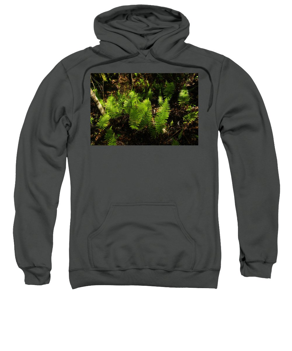 Fine Art Photography Sweatshirt featuring the photograph Dancing Ladys by David Lee Thompson