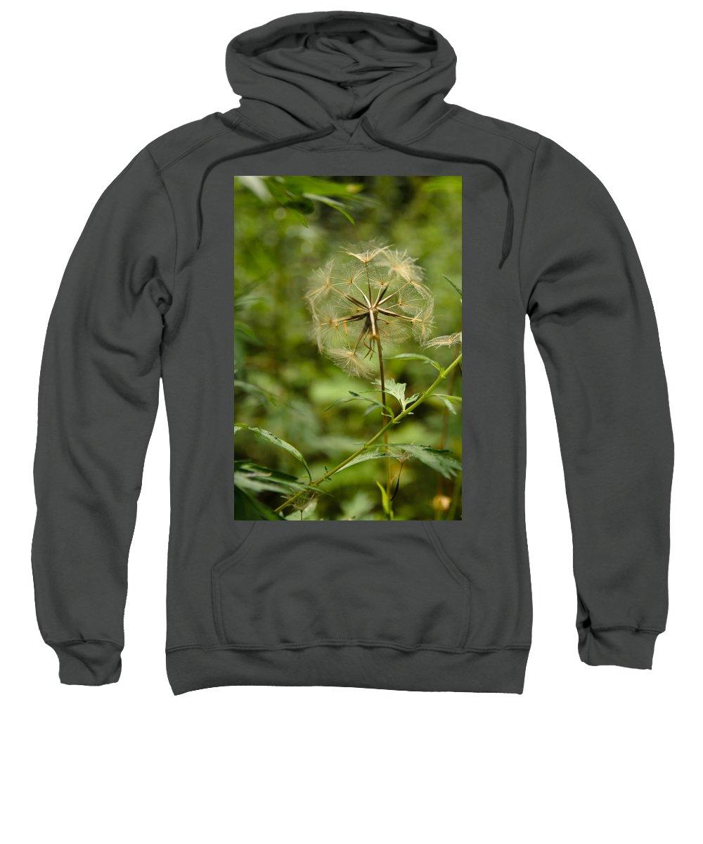Blowball Sweatshirt featuring the photograph Dandelion by Michael Goyberg