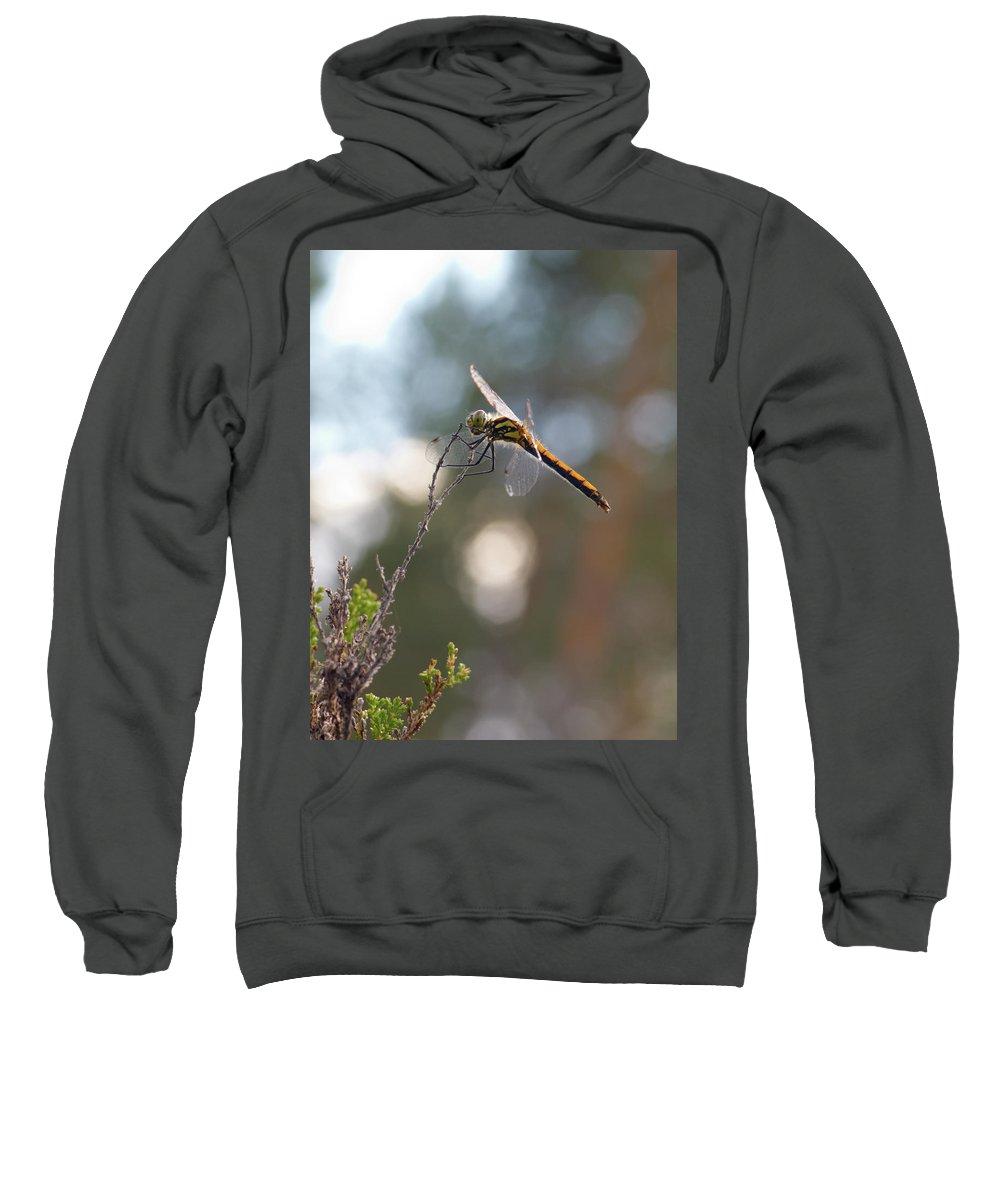 Jouko Lehto Sweatshirt featuring the photograph Darter 4 by Jouko Lehto