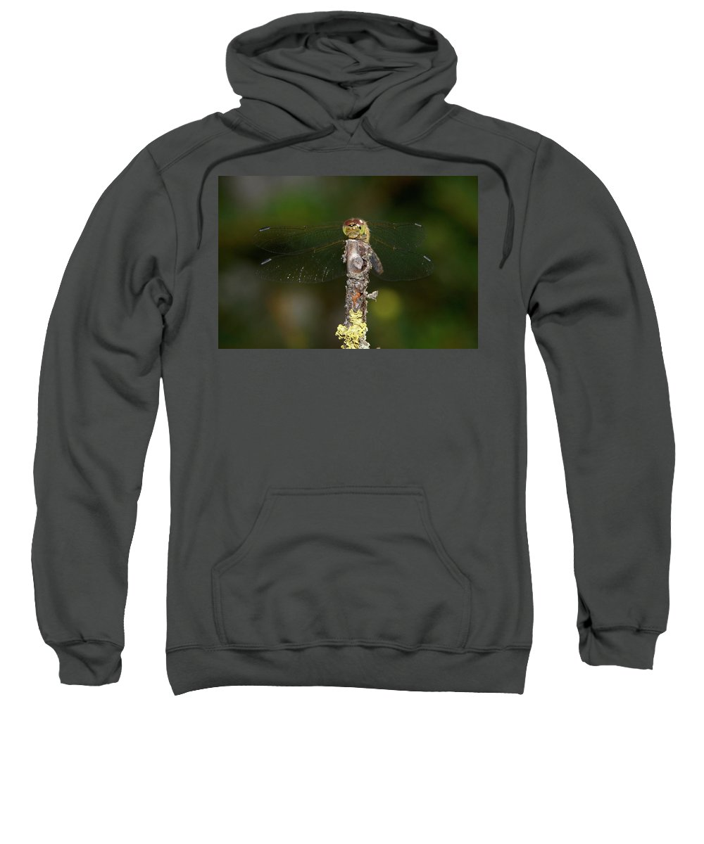 Jouko Lehto Sweatshirt featuring the photograph Darter 7 by Jouko Lehto