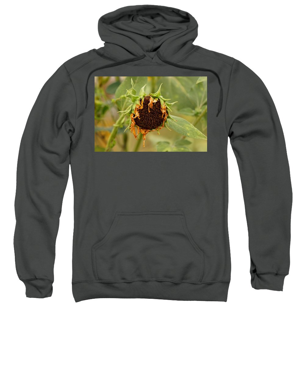 Dead Sweatshirt featuring the photograph Dead Sunflower by Alan Hutchins