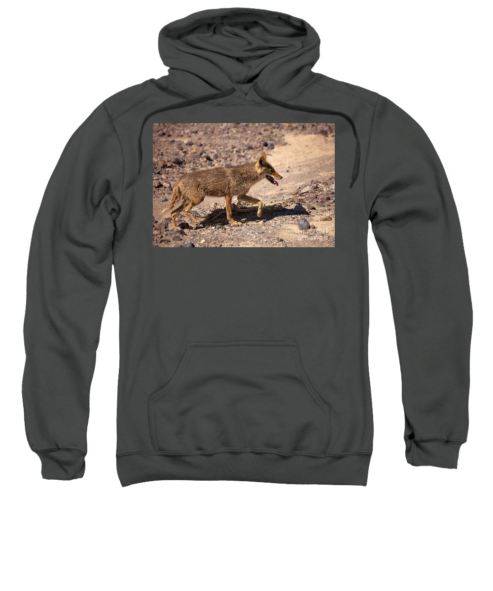 Coyote Sweatshirt featuring the photograph Death Valley Coyote by Mike Dawson