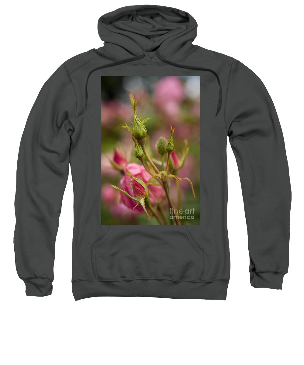 Flower Sweatshirt featuring the photograph Delicate Renewal by Mike Reid