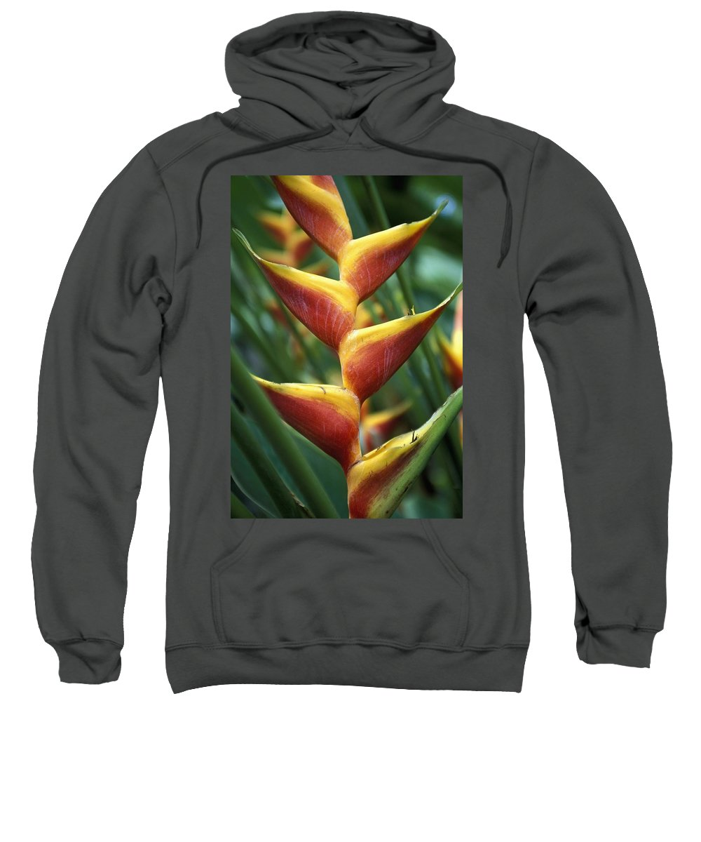 Vertical Sweatshirt featuring the photograph Detail Of Flower From Garden Of The by Axiom Photographic