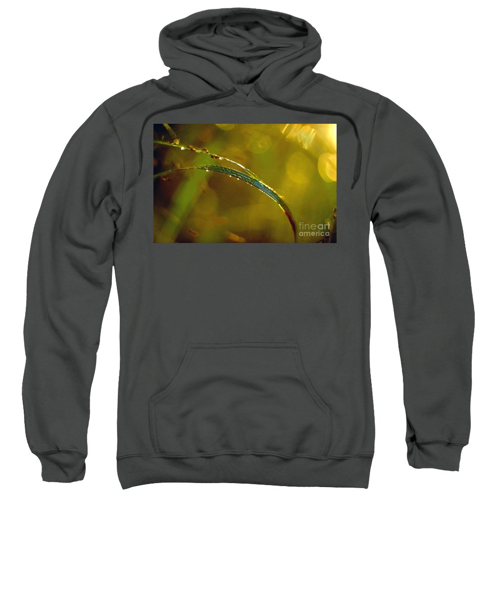 Grass Sweatshirt featuring the photograph Dew Drops On Blade Of Grass by Thomas Firak
