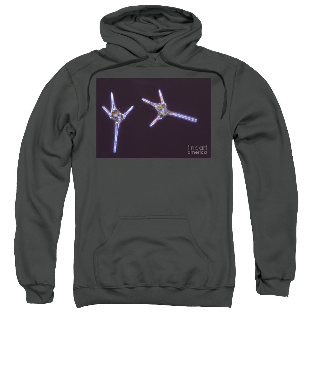 Light Microscopy Sweatshirt featuring the photograph Dinoflagelate by M. I. Walker
