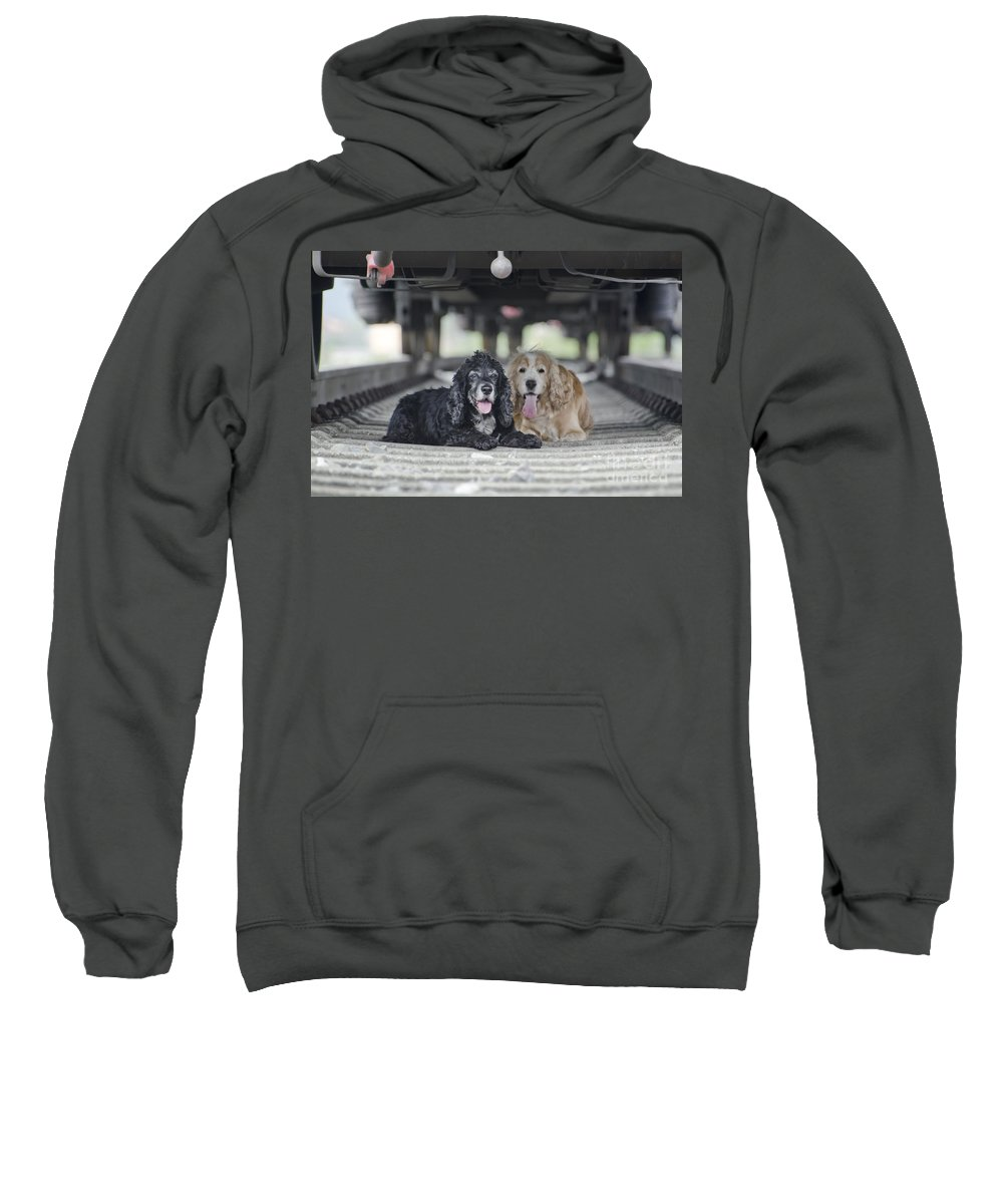 Dogs Sweatshirt featuring the photograph Dogs Lying Under A Train Wagon by Mats Silvan