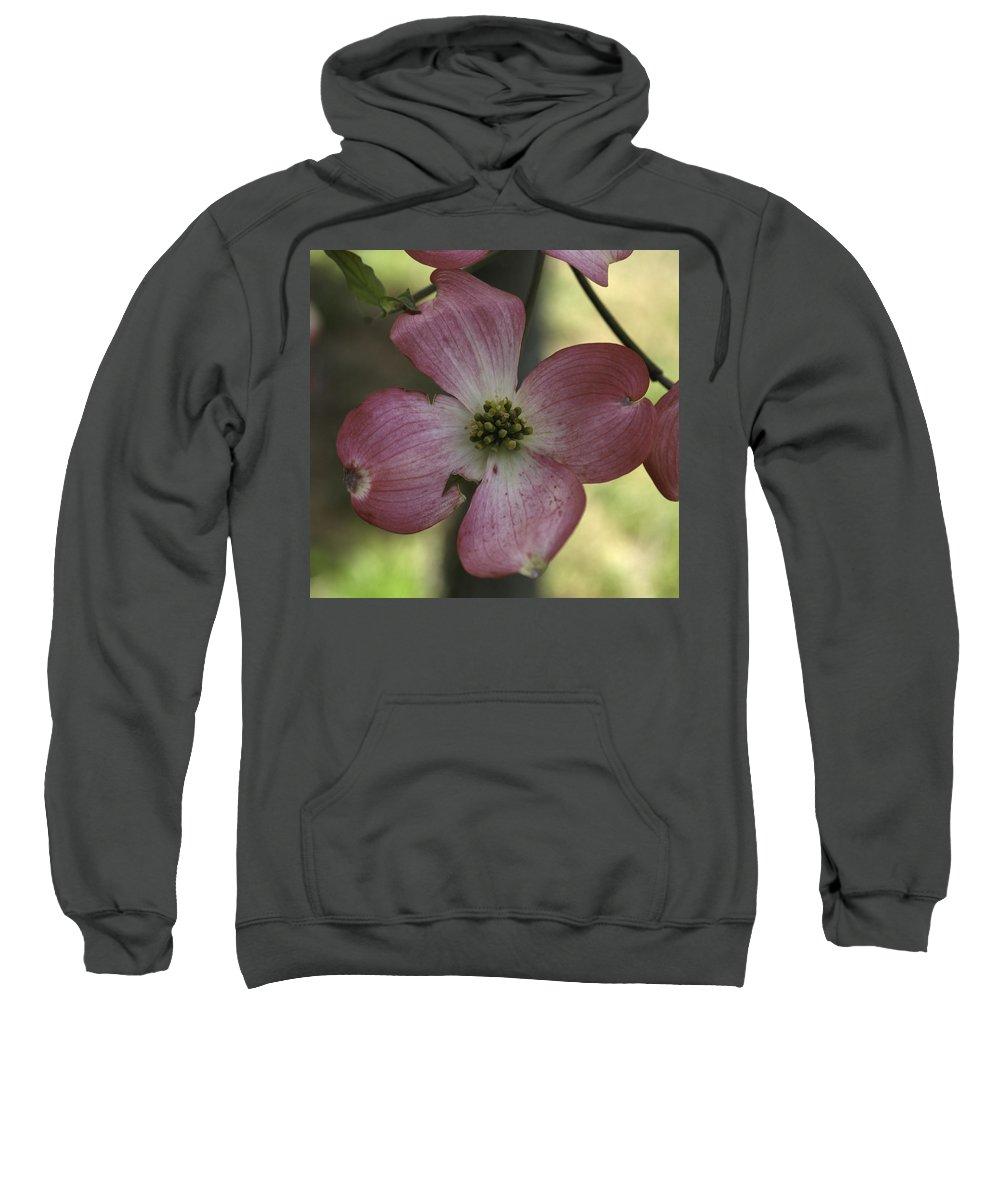 Dogwood Sweatshirt featuring the photograph Dogwood Blossom by Henri Irizarri