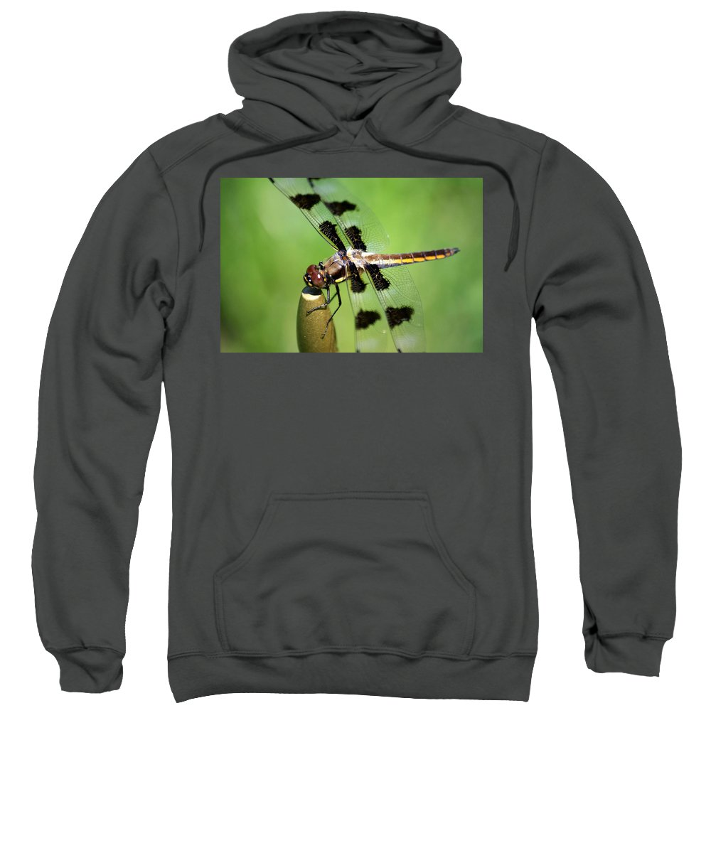 Dragonfly Sweatshirt featuring the photograph Dragonfly In Black 2 by Dennis Pintoski