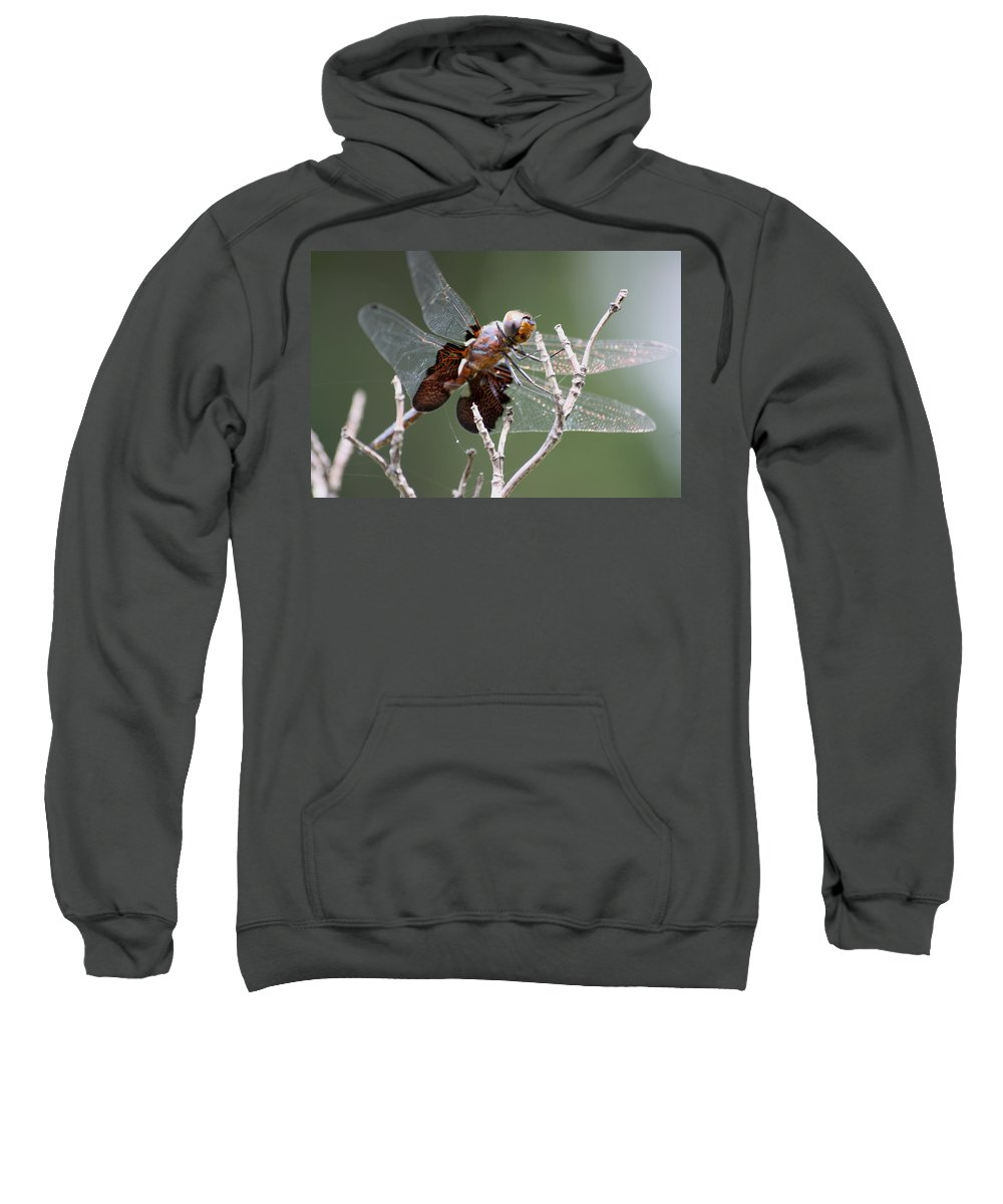 Wildlife Sweatshirt featuring the photograph Dragonfly On The Tree by Dennis Pintoski
