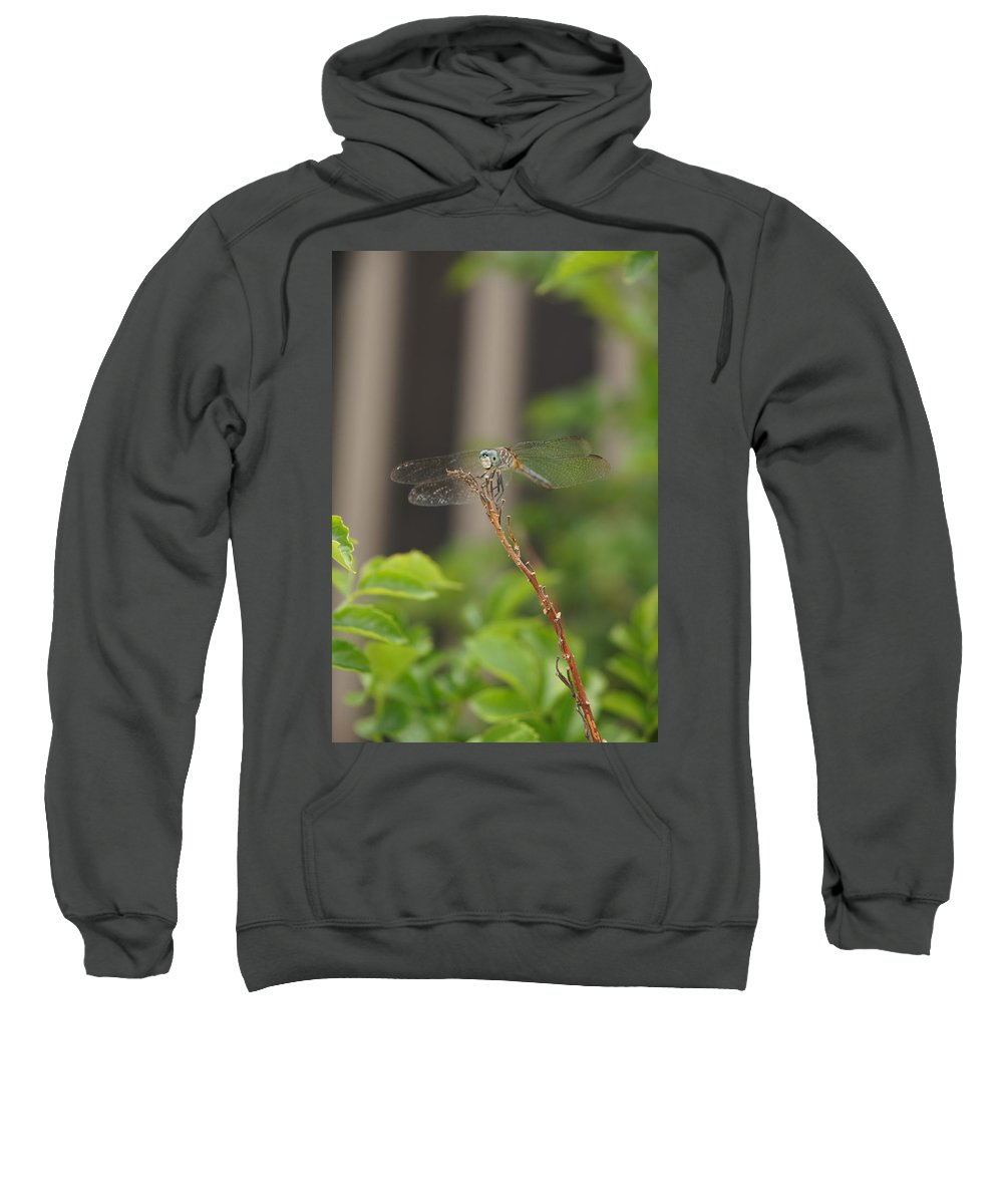 Dragonfly Sweatshirt featuring the photograph Dragonfly Smile by Megan Cohen