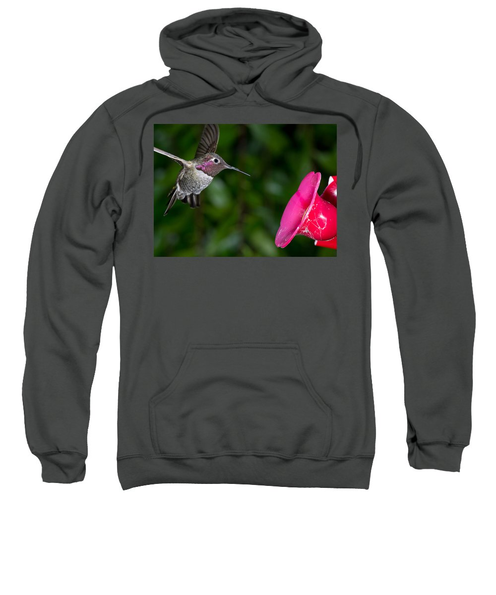 Hummingbird Sweatshirt featuring the photograph Drinking Time by Greg Nyquist