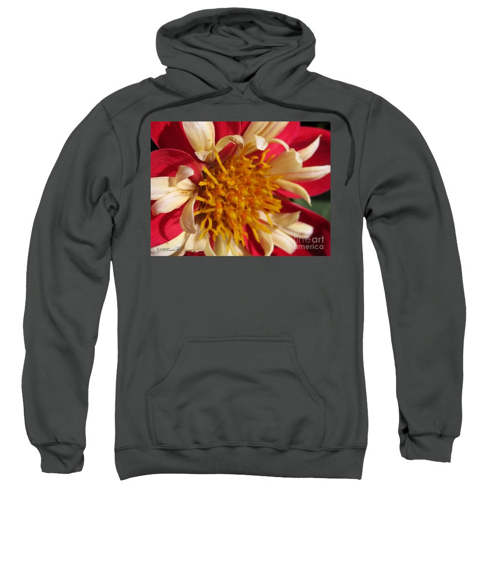 Dwarf Sweatshirt featuring the photograph Dwarf Dahlia From The Collarette Dandy Mix by J McCombie