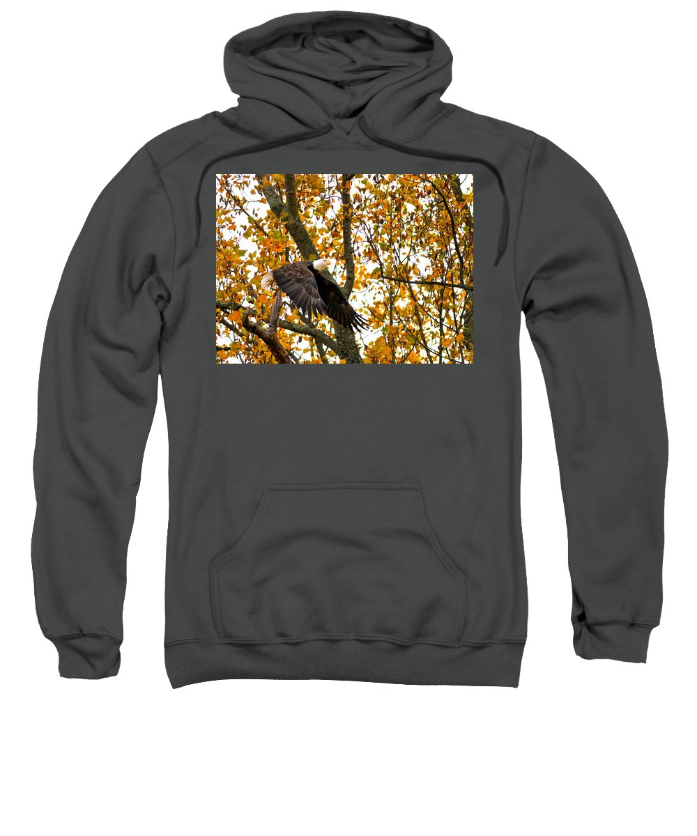 Eagle Sweatshirt featuring the photograph Eagle In Autumn by Randall Branham