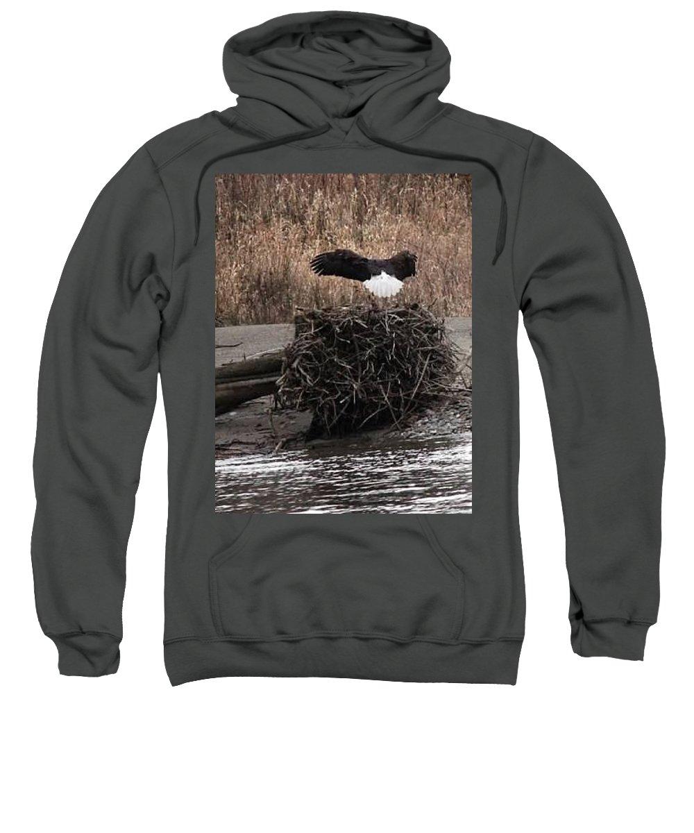 Eagle Sweatshirt featuring the photograph Eagle Landing by Shelley Aasland
