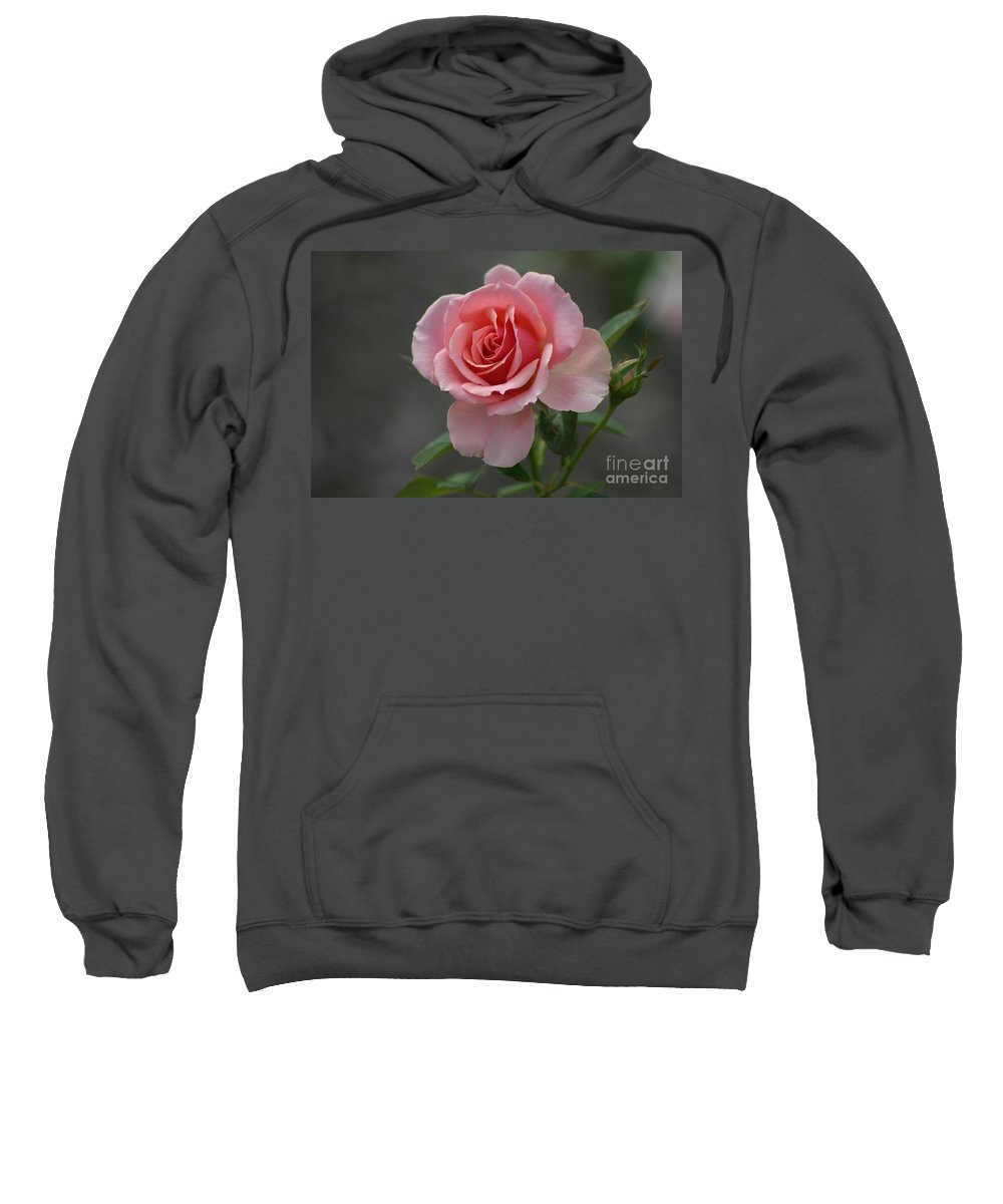 Rose Sweatshirt featuring the photograph Early Morning Rose by Living Color Photography Lorraine Lynch
