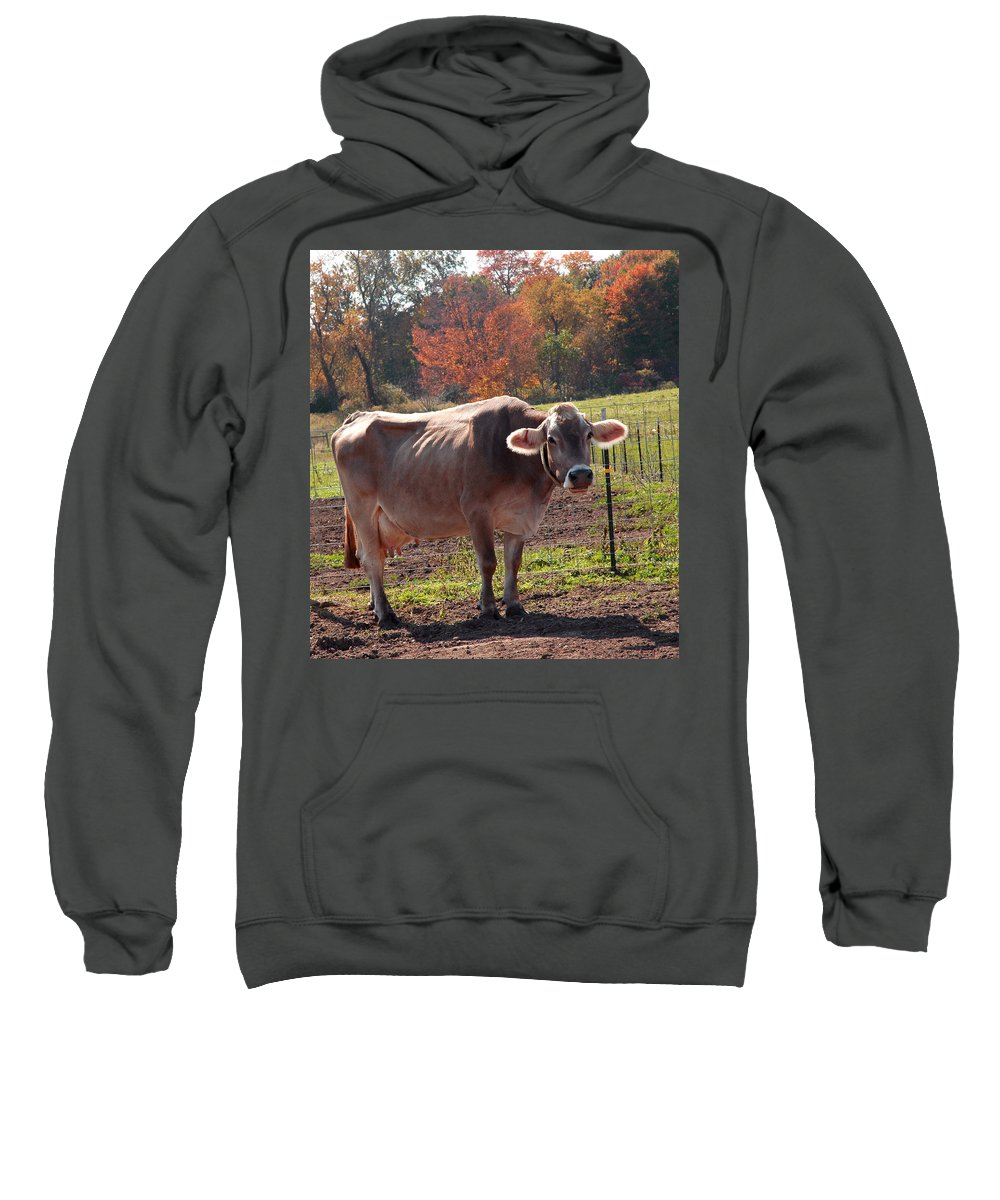 United_states Sweatshirt featuring the photograph Fall Cow by LeeAnn McLaneGoetz McLaneGoetzStudioLLCcom
